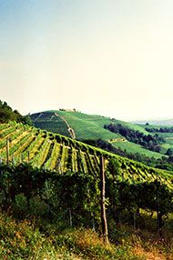 A Tour of Italy, Tutored Tasting, 5th February 2016