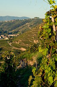 An Introduction to the Rhône, Tutored Tasting, 3rd March 2016