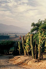 Introduction to Chile, Tutored Tasting, 22nd June 2016