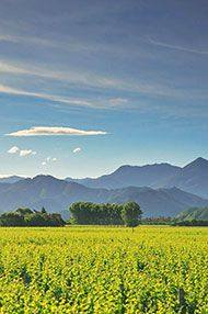 Introduction to New Zealand, Tutored Tasting, 29th June 2016