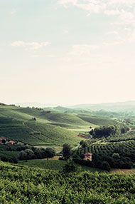 Introduction to Barolo and Barbaresco, Friday 17th March 2017