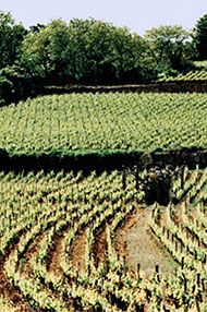 Puligny, Chassagne and Meursault, Thursday 8th June 2017