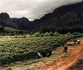 South Africa Fine Wines